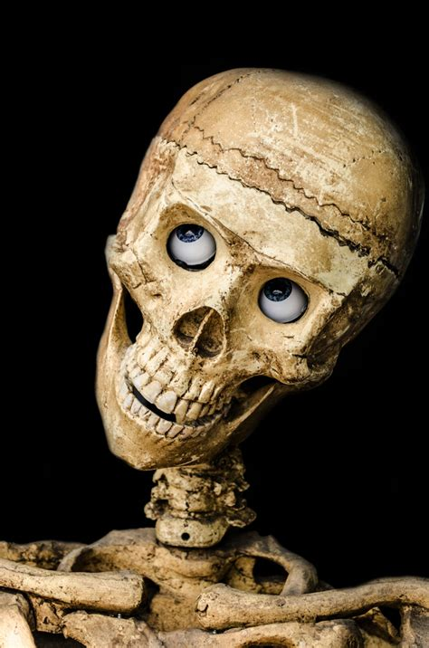 Skull Free Stock Photo - Public Domain Pictures