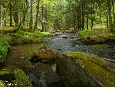 See hiking trails before you go: Allegheny National Forest
